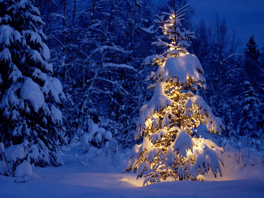 Special Christmas Trees Lighting the Fuse 7c5tOkEE